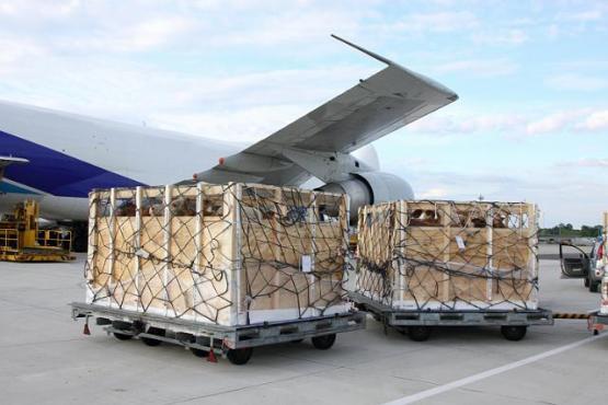 Bringing cattles to plane in Kazachstan